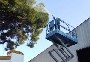 fumigacion contra procesionaria oruga del pino en cadiz