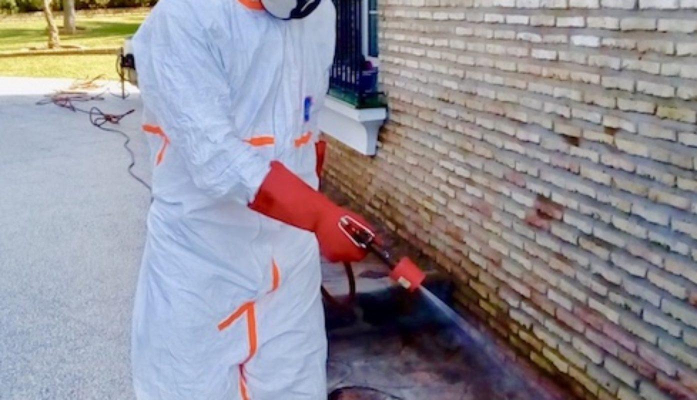 Desinsectación y tratamientos en Hogar. Hormigas, cucarachas e insectos rastreros