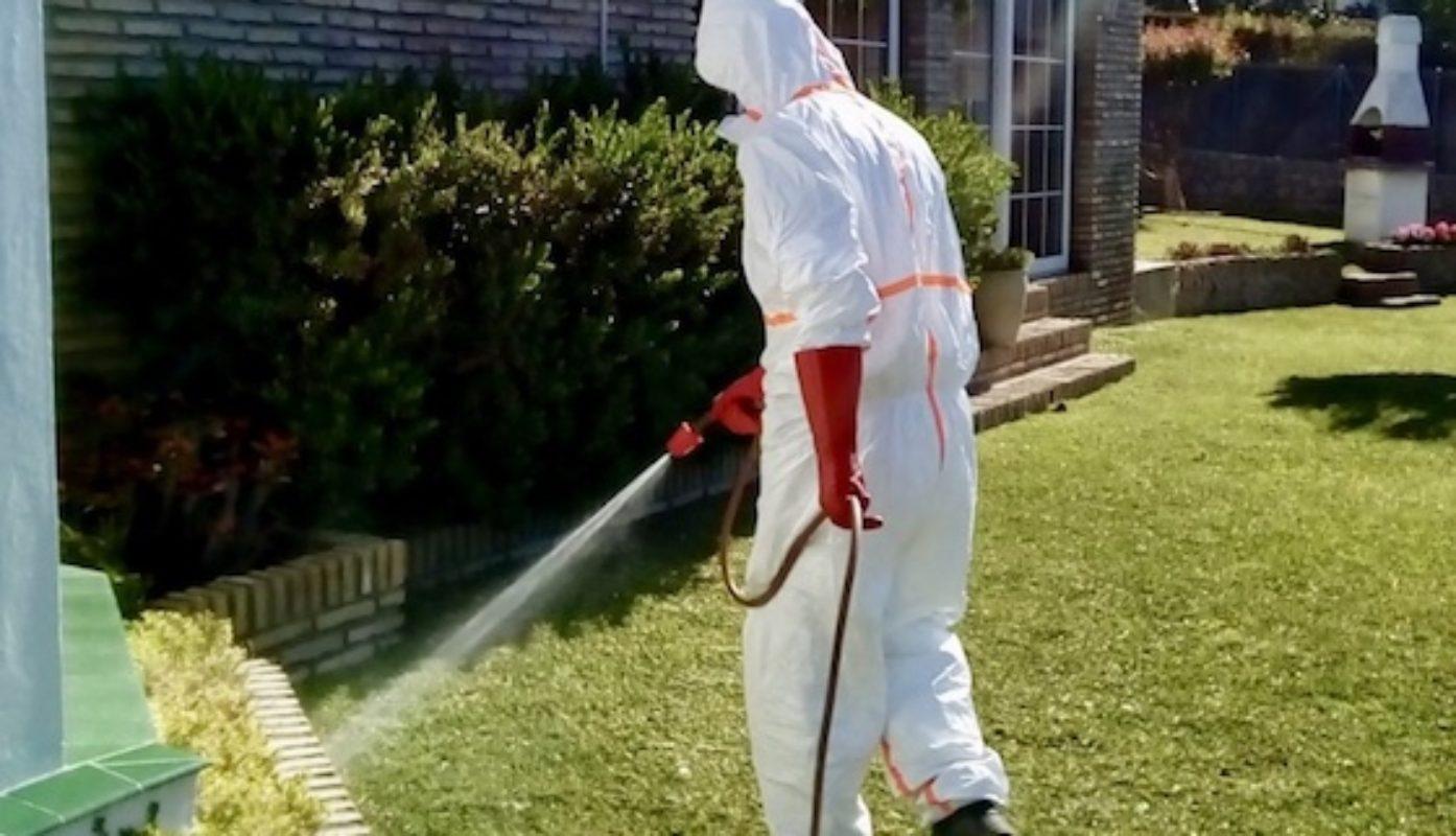 Fumigación contra hormigas. Insectos en chalet
